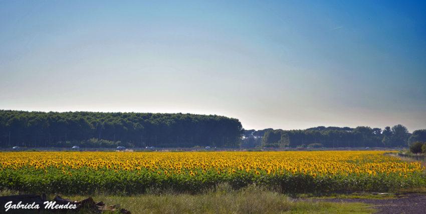 campos-girassol-toscana-blog-gira-mundo