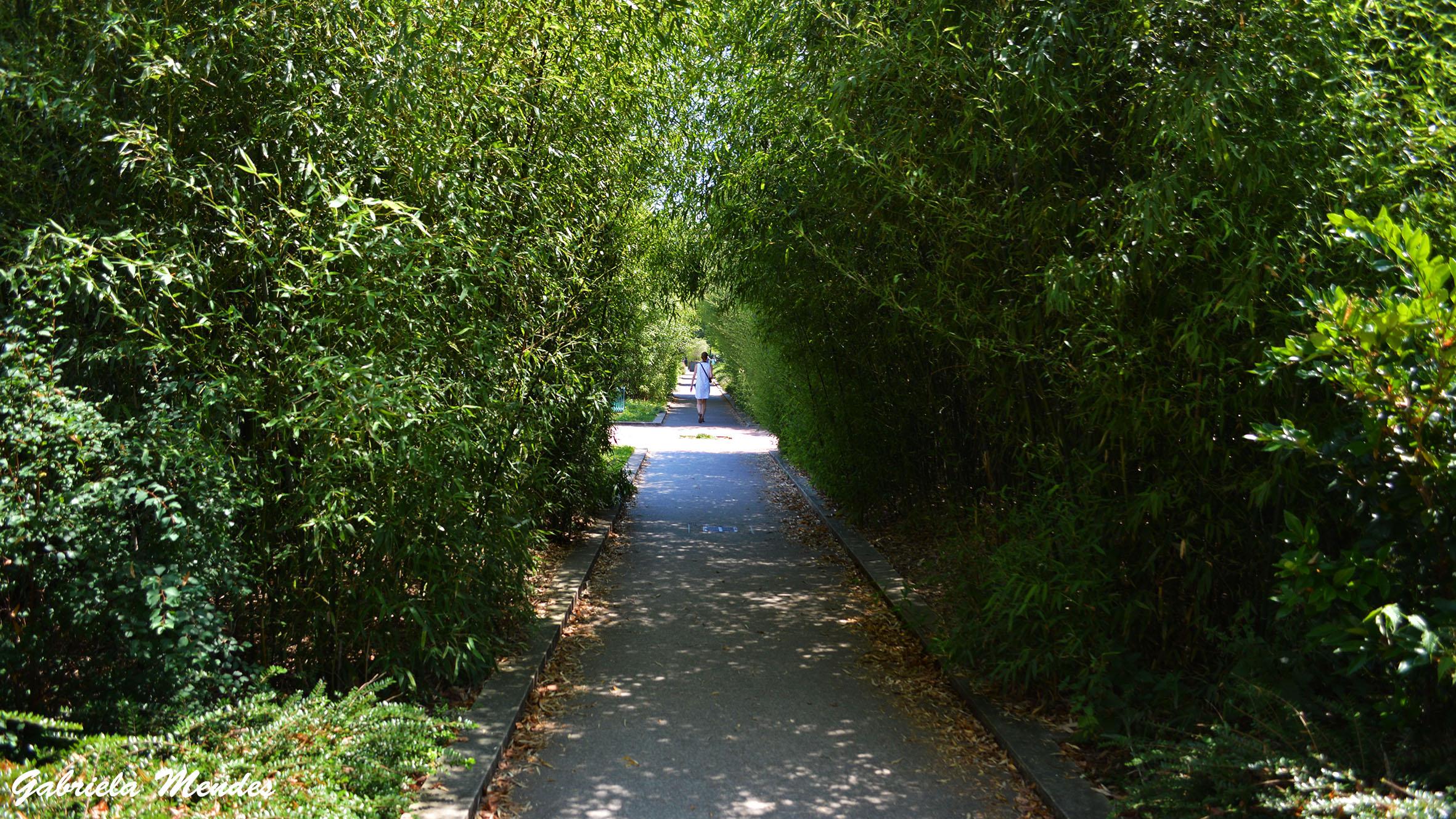 O caminho de bambus da Promenade Plantée