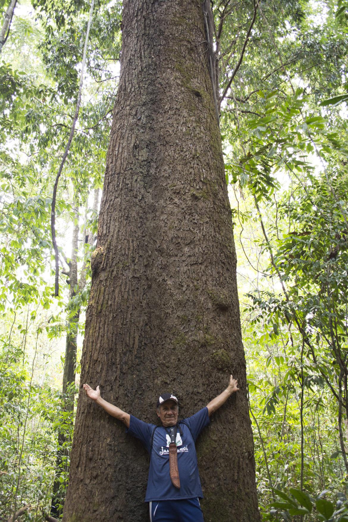 Conhecendo a Floresta Nacional do Tapajós – FLONA, em um bate-volta de Alter do Chão