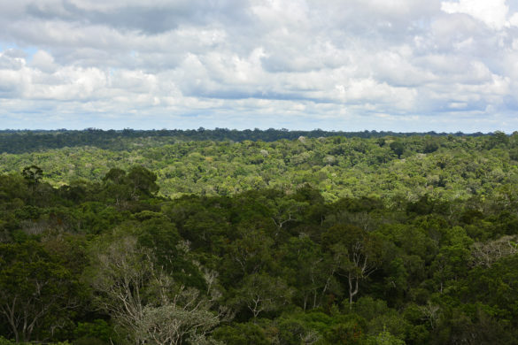 Guia de Manaus: passeios e informações para visitar a capital do Amazonas