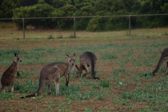 Austrália: Um giro pela famosa Great Ocean Road, em Victoria