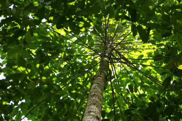 ilha-do-combu-belem-para-blog-gira-mundo