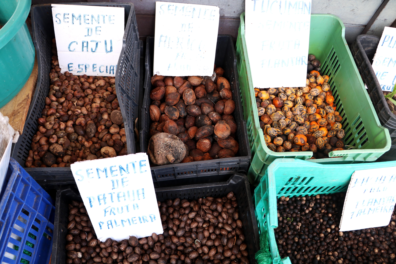 sementes-ver-o-peso-belem-para-blog-gira-mundo