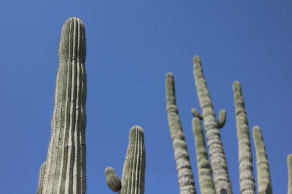 Cicloviagem e Couchsurfing: Visitando o Cactuário de Zapotitlán Salinas, em Puebla, México