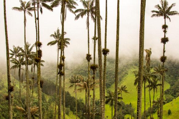 Colômbia: informações que você precisa saber antes de viajar