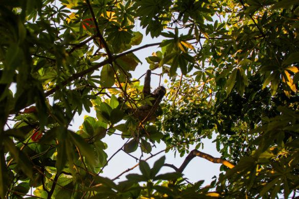 O que fazer em Cartagena das Índias, na Colômbia