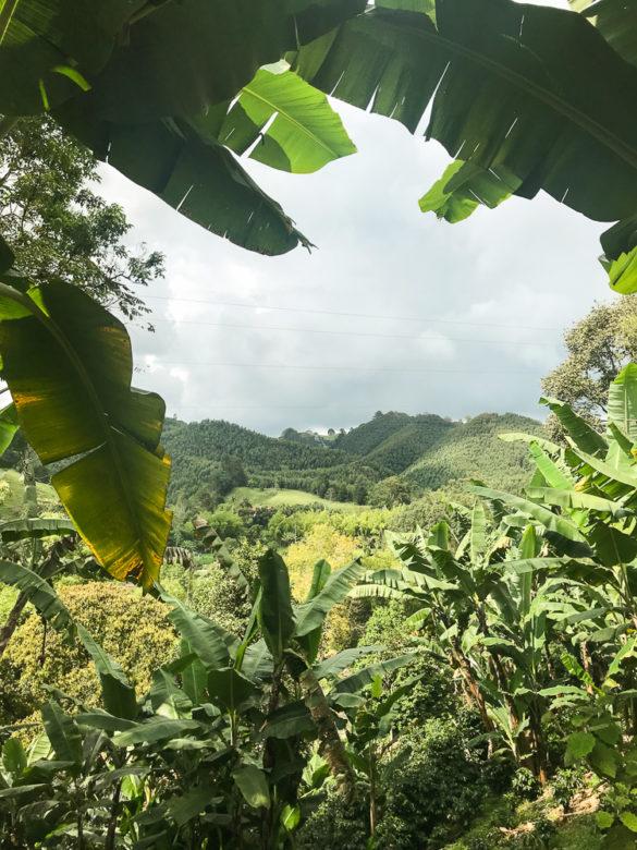 Como é visitar as fazendas de café em Salento, na Colômbia