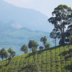 Plantações de chá em Munnar