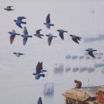 Dia raiando em Varanasi