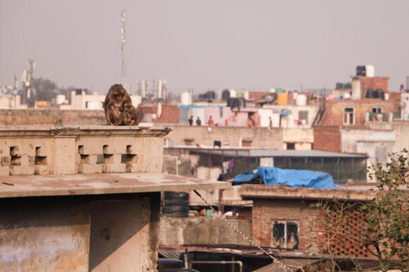 Guia de Déli: nossas dicas sobre a capital da Índia